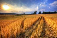 Zone de blé sur le coucher du soleil Image libre de droits