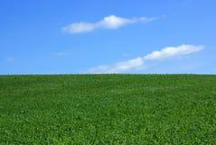 Zone de blé vert. Photo libre de droits