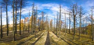 Zone de brûlure du feu de forêt Images stock