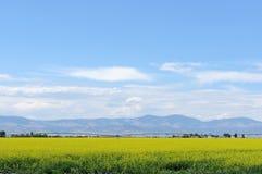 Zone de Canola Image libre de droits