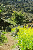 Zone de Canola photo stock