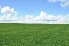 Zone de collecte verte Image libre de droits