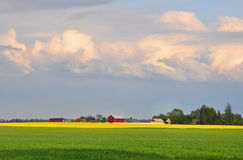 Zone de colza et de blé image libre de droits