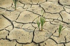 Zone de ferme pendant la sécheresse Photo stock