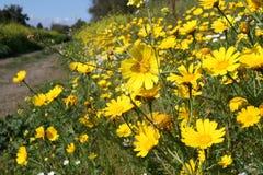 Zone de fleur Photographie stock libre de droits