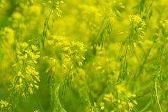 Zone de fleur jaune Photo libre de droits