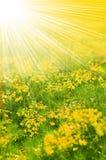 Zone de fleur jaune Photographie stock libre de droits