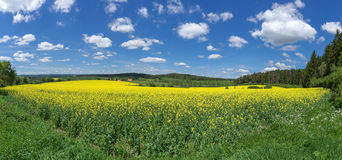 Zone de floraison de Canola Photos stock