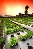 Zone de légumes Photos stock