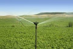 Zone de légumes d'irrigation avec l'arroseuse photographie stock libre de droits