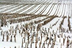 Zone de l'hiver Photographie stock