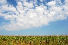 Zone de maïs 10 Image libre de droits