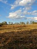 Zone de maïs photographie stock libre de droits