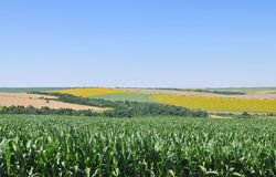Zone de maïs photographie stock