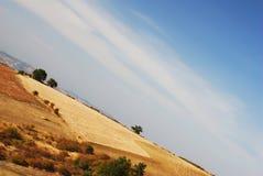 Zone de maïs dans la campagne Photographie stock libre de droits