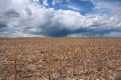 Zone de maïs dans la sécheresse avec la pluie entrante Image stock