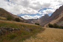 Zone de maïs dans Ladakh Photographie stock libre de droits