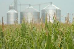 Zone de maïs et moulin de gain Image stock