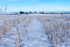 Zone de maïs moissonnée sous la neige Image libre de droits