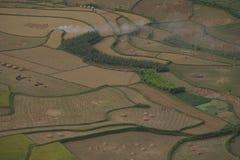 Zone de riz Image libre de droits