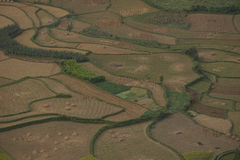 Zone de riz Photo libre de droits