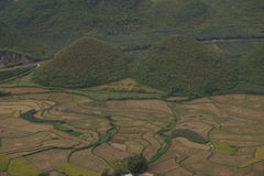 Zone de riz Images stock