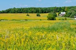 Zone de soja Photos libres de droits