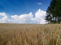 Zone de texture Image libre de droits