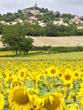 Zone de tournesol avec le village de Le Crest Images stock