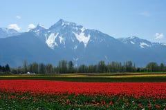 Zone de tulipe en île d'oiseau de mer Image libre de droits