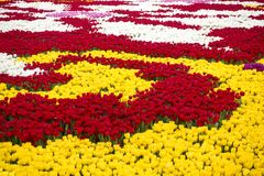 Zone de tulipes photo libre de droits