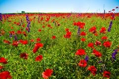 Zone de Wildflowers images stock