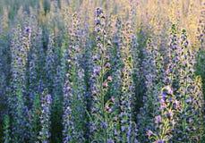 Zone des fleurs Images libres de droits