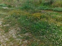 Zone des fleurs Photo libre de droits