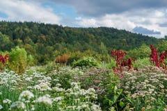 Zone des fleurs sauvages photographie stock libre de droits