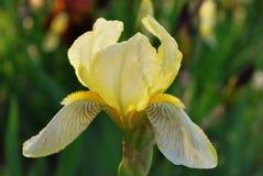Zone des iris Photos libres de droits