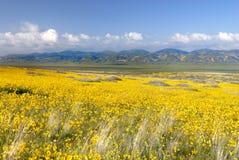 Zone des marguerites Photo libre de droits