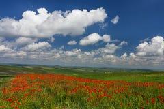 Zone des pavots et du ciel bleu photographie stock