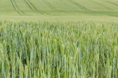 Zone des textures vertes organiques Photo stock