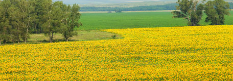 ZONE DES TOURNESOLS Photos stock