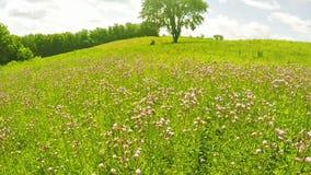 Zone des Wildflowers clips vidéos