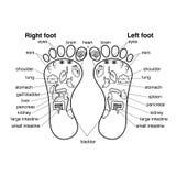 Zone di reflessologia dell'illustrazione di vettore dei piedi, royalty illustrazione gratis