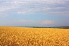 Zone du blé Image stock