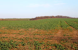 Zone en automne Images stock