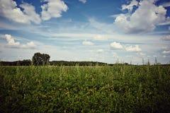 Zone et arbres verts Image stock