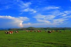 Zone et ciel Photographie stock libre de droits