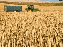 Zone et entraîneur de blé Image libre de droits