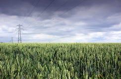 Zone et pylône de blé Images libres de droits