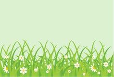 Zone herbeuse. Image stock