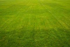 Zone herbeuse Photographie stock